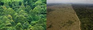 Tropisch regenwoud - antwoorden op oorzaak kriebelhoest